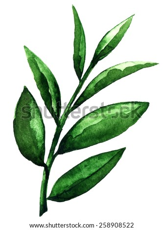 watercolor tea green leaves