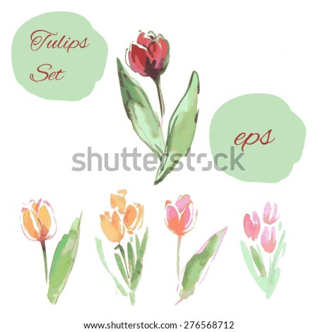 watercolor tulip illustration