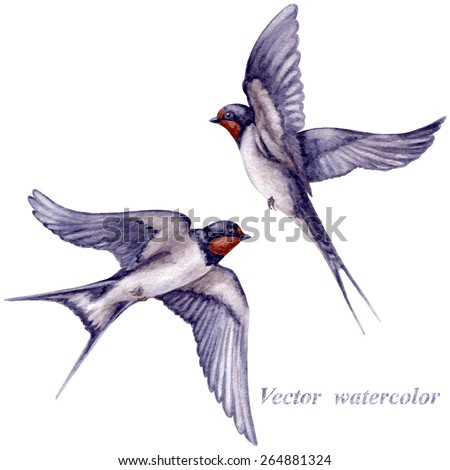 watercolor two  flying swallows