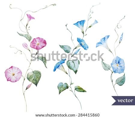 watercolor vector drawing
