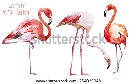 watercolor  vector  flamingos