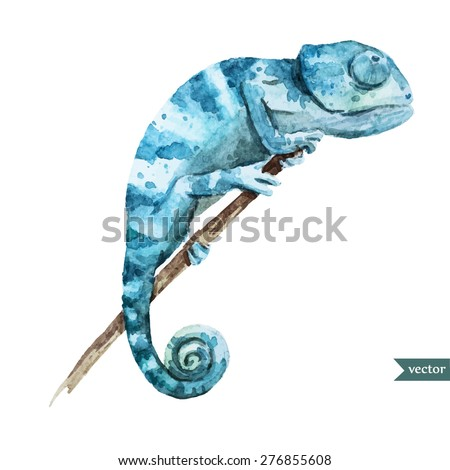 watercolor vector illustration chameleon reptile