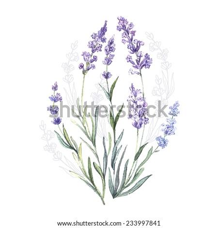 watercolor vector lavender