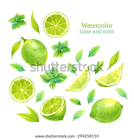 watercolor vector lime and mint
