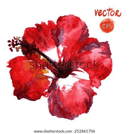 watercolor vector red hibiscus