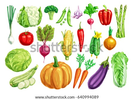 Watercolor vegetables. Tomato and carrot, pepper, cabbage and onion, radish, broccoli and green onion, cucumber and zucchini, eggplant, pumpkin and corn, pea and garlic, asparagus and cauliflower
