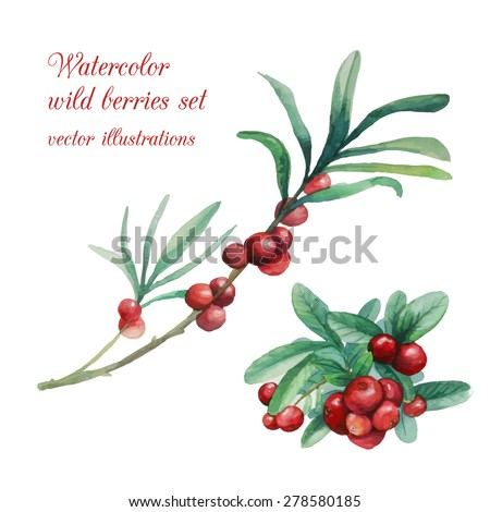 watercolor wild berries