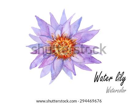 waterlilyhand drawn watercolor
