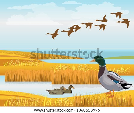Stock Photo Waterscape with wild ducks. Vector illustration