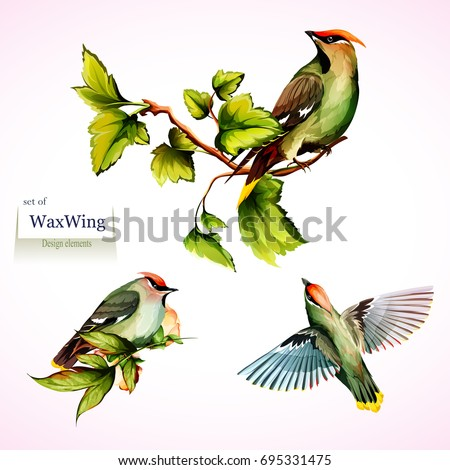 waxwing on branches with leaves....