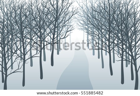 way through misty forest road