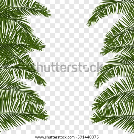 Web summer banner. Green palm leaves template isolated on transparent background. Summer vector abstract illustration. Realistic picture tropical Paradise for travel and ticket sales.