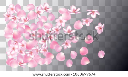 Wedding Sakura Cherry, Rose Petals Nice Confetti. Spring Vector Peach, Apple Flower Falling Sakura Cherry and Rose Confetti Falling Down. Windy Floral Design, Natural Cosmetics Decoration