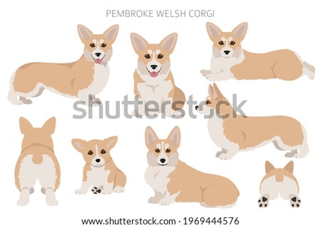 Welsh corgi pembroke clipart. Different poses, coat colors set.  Vector illustration
