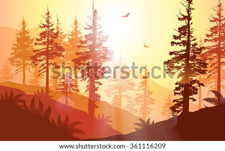west coast forest in warm