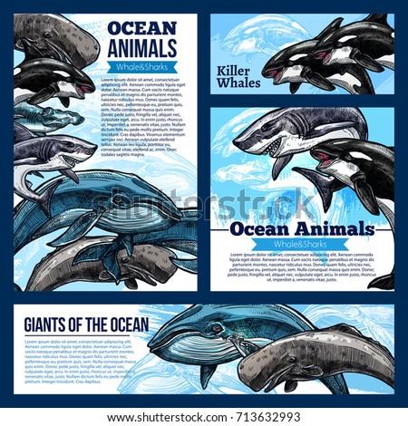 Shutterstock Whale and shark, giant ocean animal banners. Whale, reef shark, killer whale or orca and hammerhead shark sketch poster, marine animal flyer for zoo, oceanarium, marine mammal park design