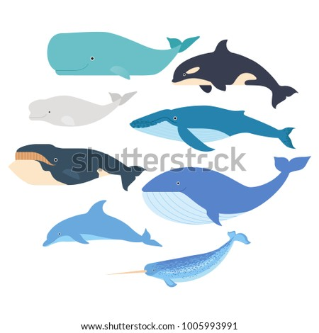 Whales and dolphin set. Marine mammals illustration. Narwhal, blue whale, dolphin, beluga whale, humpback whale, bowhead and sperm whale vector isolated