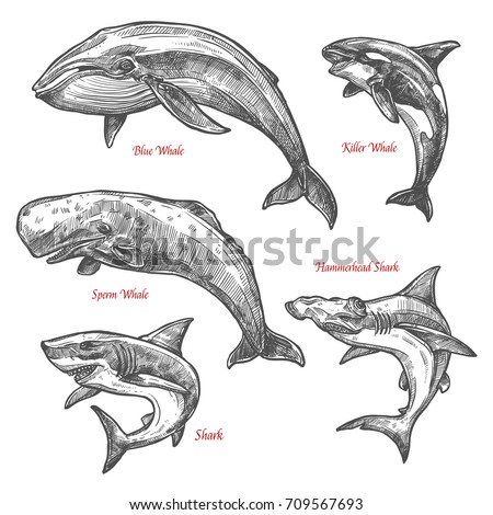 whales and sharks sketch icons...