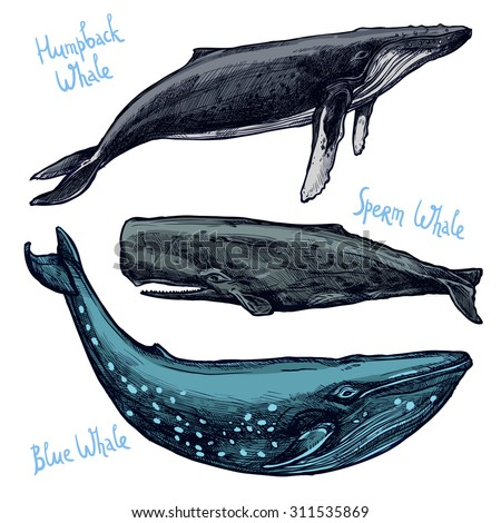 whales set  collection of