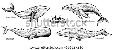 whales vector hand drawn
