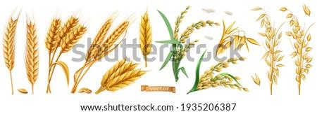 Wheat, barley, oats, rice. 3d realistic vector set Stockfoto ©