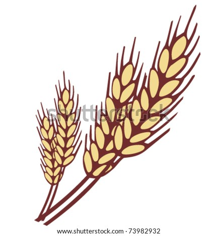 Wheat ear vector illustration