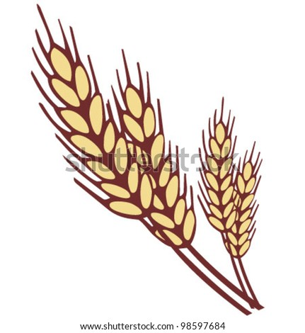 Wheat ear. Vector illustration