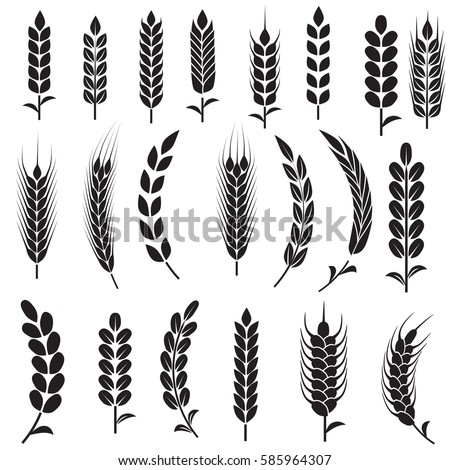 Wheat Ears Icons and Logo Set. For Identity Style of Natural Product Company and Farm Company. Organic wheat, bread agriculture and natural eat. Contour lines. Flat design.