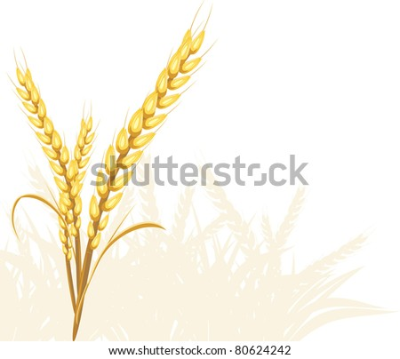 stock-vector-wheat-ears-vector-80624242.