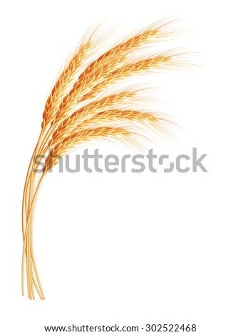 wheat ears with space for text