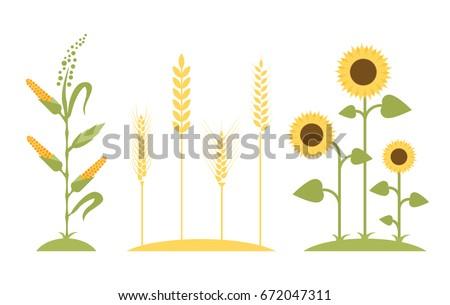 wheat field sunflower icon