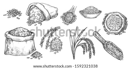 Wheat grain and ear spikes, vector sketch icons. Wheat, rye, barley or rice grain in scoops and sack bags, bread baking ingredient, flour package design