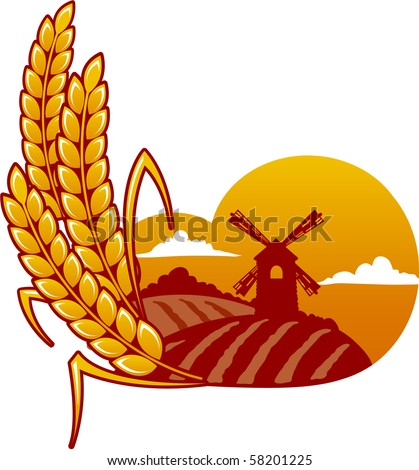 wheat on the background of the mill