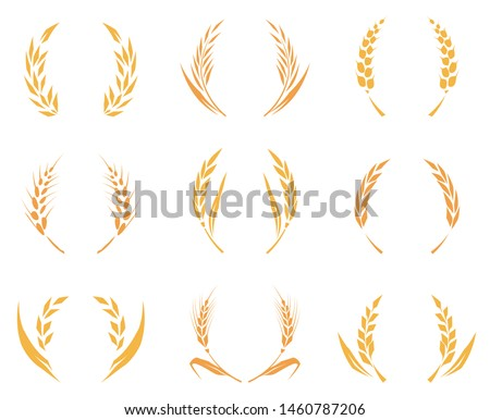Wheat or barley ears. Harvest wheat grain, growth rice stalk and whole bread grains or field cereal nutritious rye grained agriculture products ear symbol. Isolated vector icons set. Baked wheat logo.