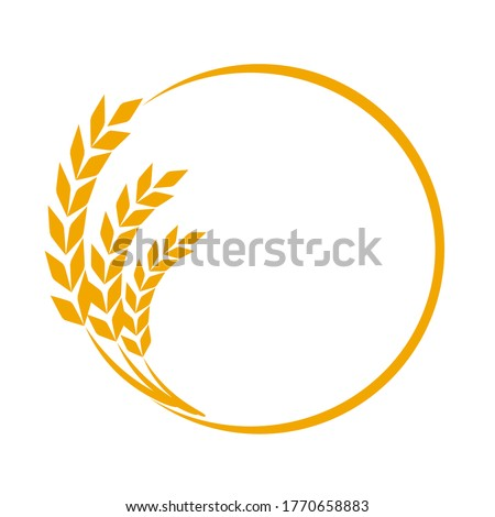 Wheat or barley ears. Harvest wheat grain, growth rice stalk and whole bread grains or field cereal nutritious rye grained agriculture products ear symbol border on white Stock photo ©