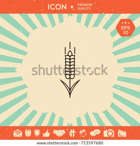 Wheat or rye spikelet icon