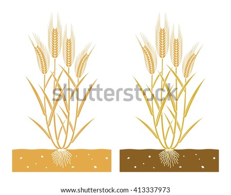 wheat plant with leaves and