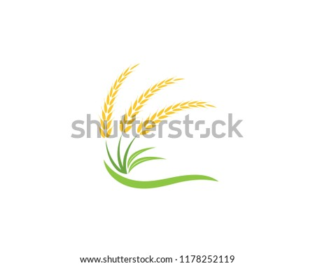 Wheat rice agriculture logo vector template