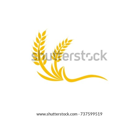 Wheat rice logo design template