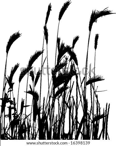 wheat silhouette - element for design