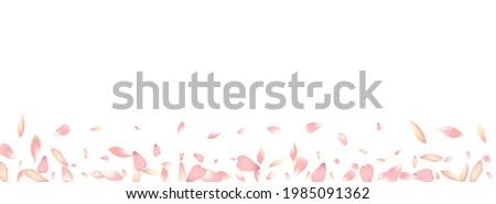 White Apple Petal Vector Panoramic Background. Pastel Fall Rose Petal Poster. Flower Petal Floral Design. Free Lotus Petal Congratulation.