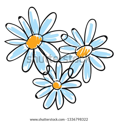 white chamomile flowers vector