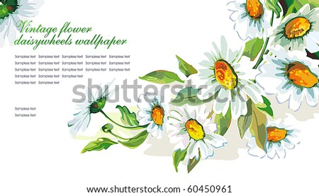 White daisywheels on isolated background. Floral vintage wallpaper. - stock vector