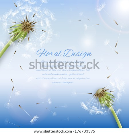 White dandelion with pollens background or cover template vector illustration