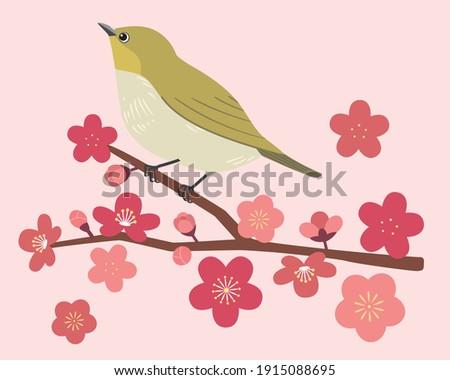 white eye and plum blossom vector illustration Stock photo ©