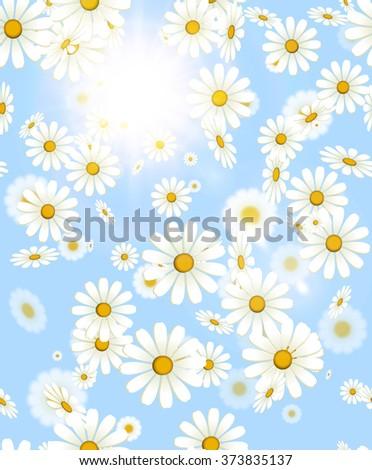white falling daisy flower