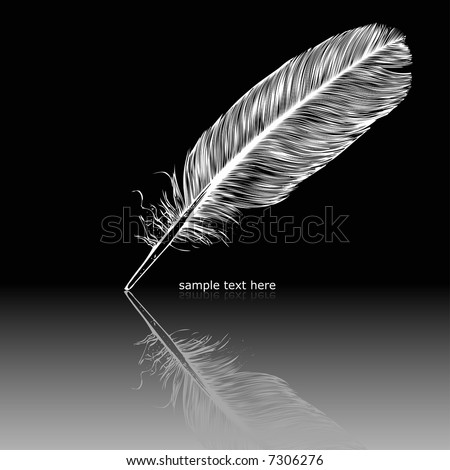 White feather on black surface.