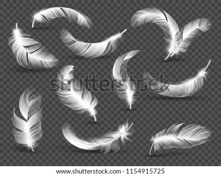 White feathers. Fluffy twirled feather isolated on transparent background. Realistic vector set of bird feather, realistic fluffy softness illustration