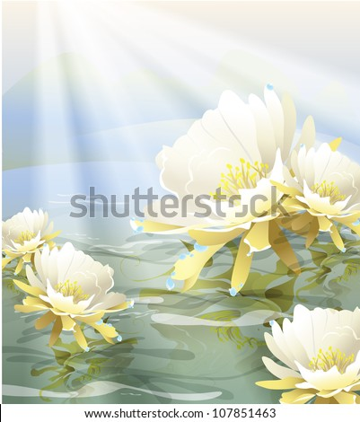 white flower floating in the water and drops of dew on the petals (the vector of the plant)