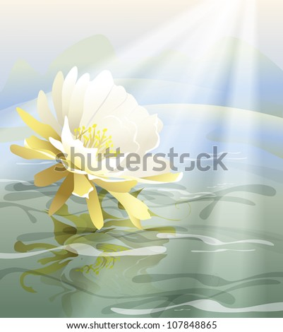 white flower floating in water (the vector of the plant)